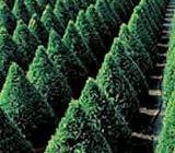 Ce tipuri de arbusti ornamentali puteti sa alegeti pentru decorarea gradinii dvs.