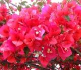 Tipuri si soiuri de arbusti decorativi pentru gradinile locuintei dvs.
