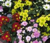 plante-decorative-apartament-icon